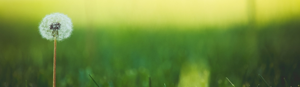 Lawn weed control tips