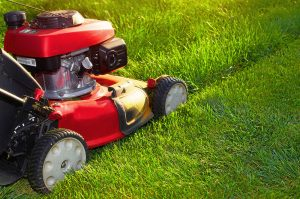 cutting grass care guide tips - Lawn Care Services Essex & Hertfordshire