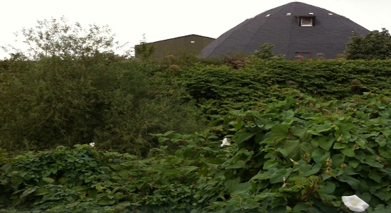 japanese knotweed removal specialist near me