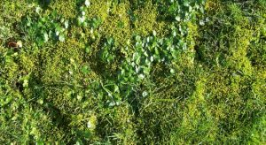 Moss Control & Treatment