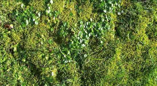 lawn-moss control and treatment services near me