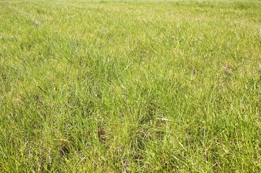 How to Get Rid of Coarse Grasses from Lawns