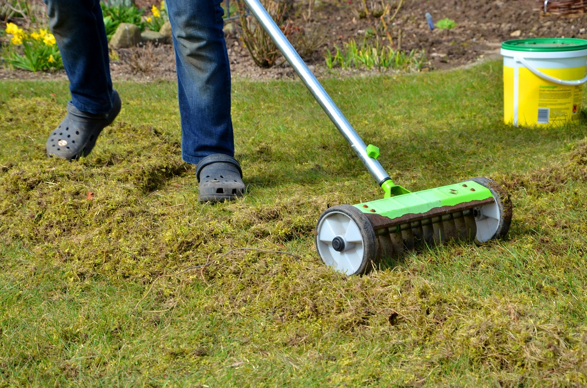 Lawn moss treatment and scarifying healthy Essex, Hertfordshire & Bedfordshire