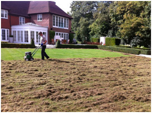 moss control in lawns killer
