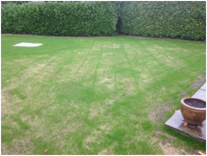 grass seed, over seeding and lawn repair