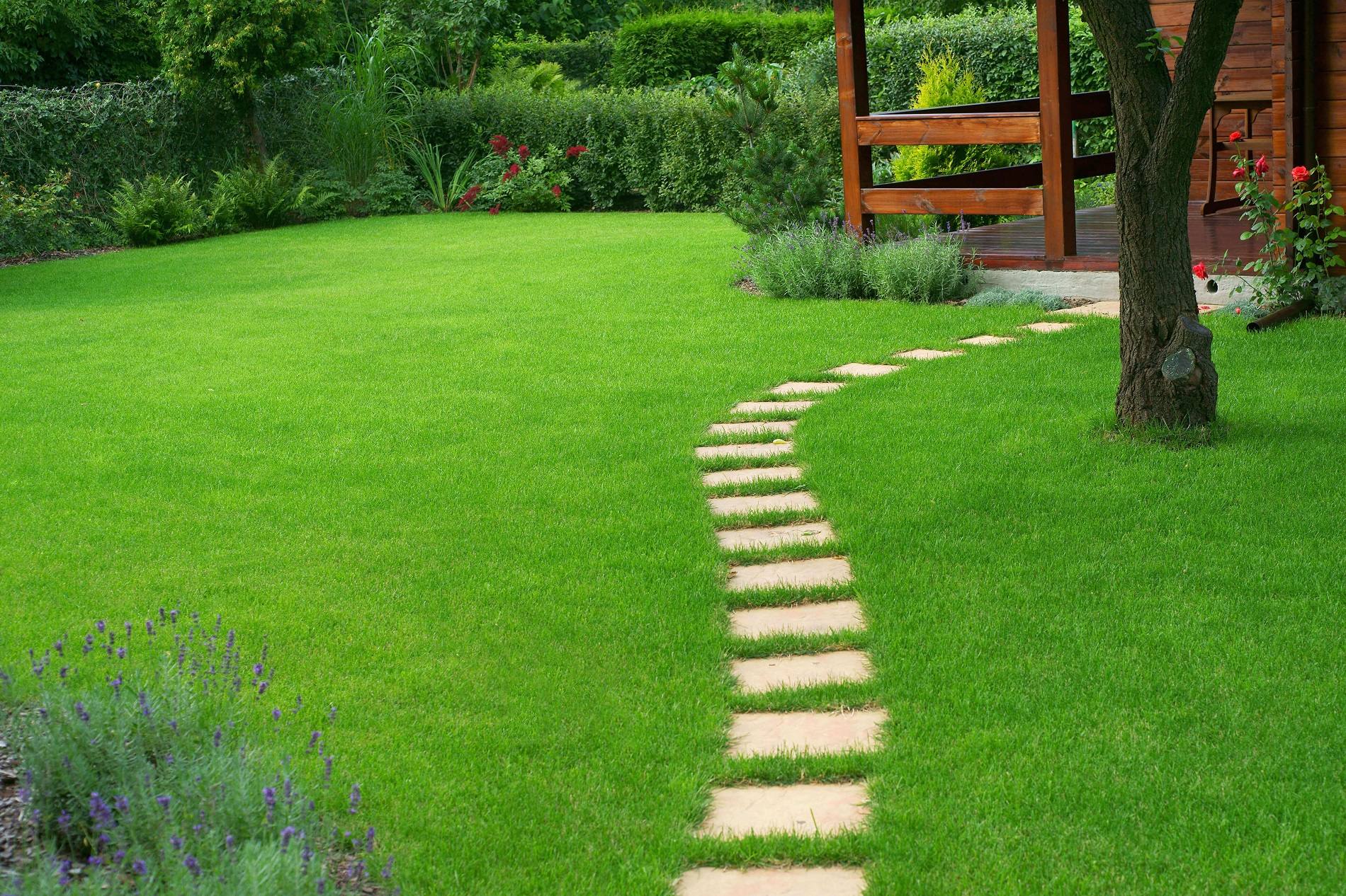 Lawn care and lawn construction Essex & Hertfordshire