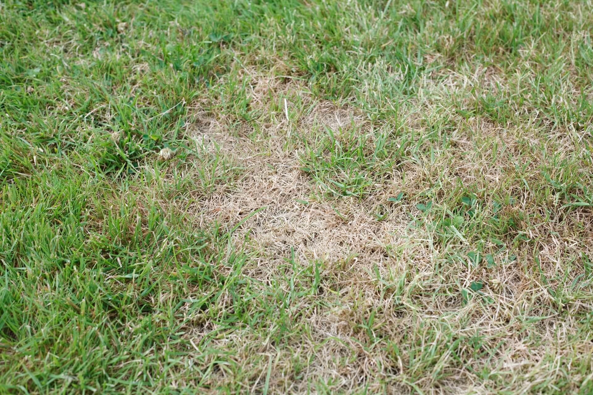 Patchy grass - blog lawn care