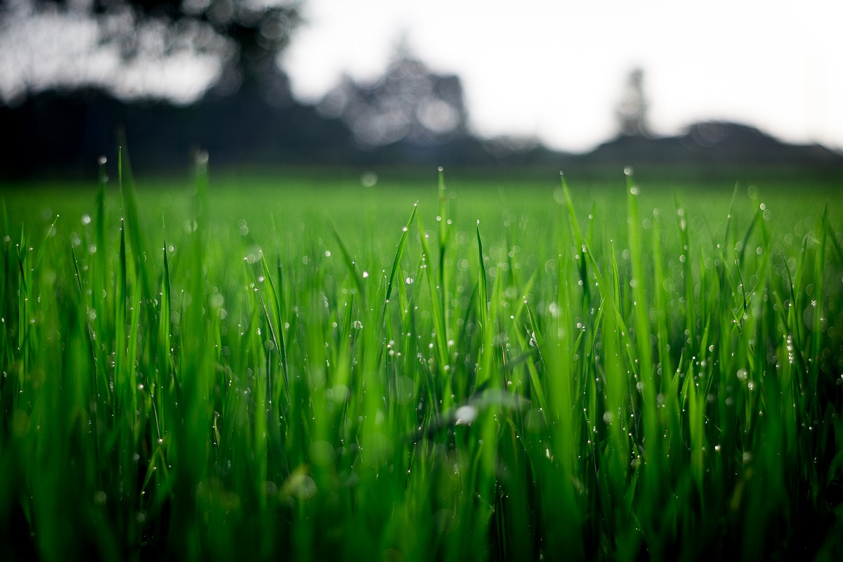 Lawn Care Services Bedfordshire - Bedford