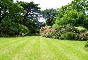Late Spring – Lawn Care Tips