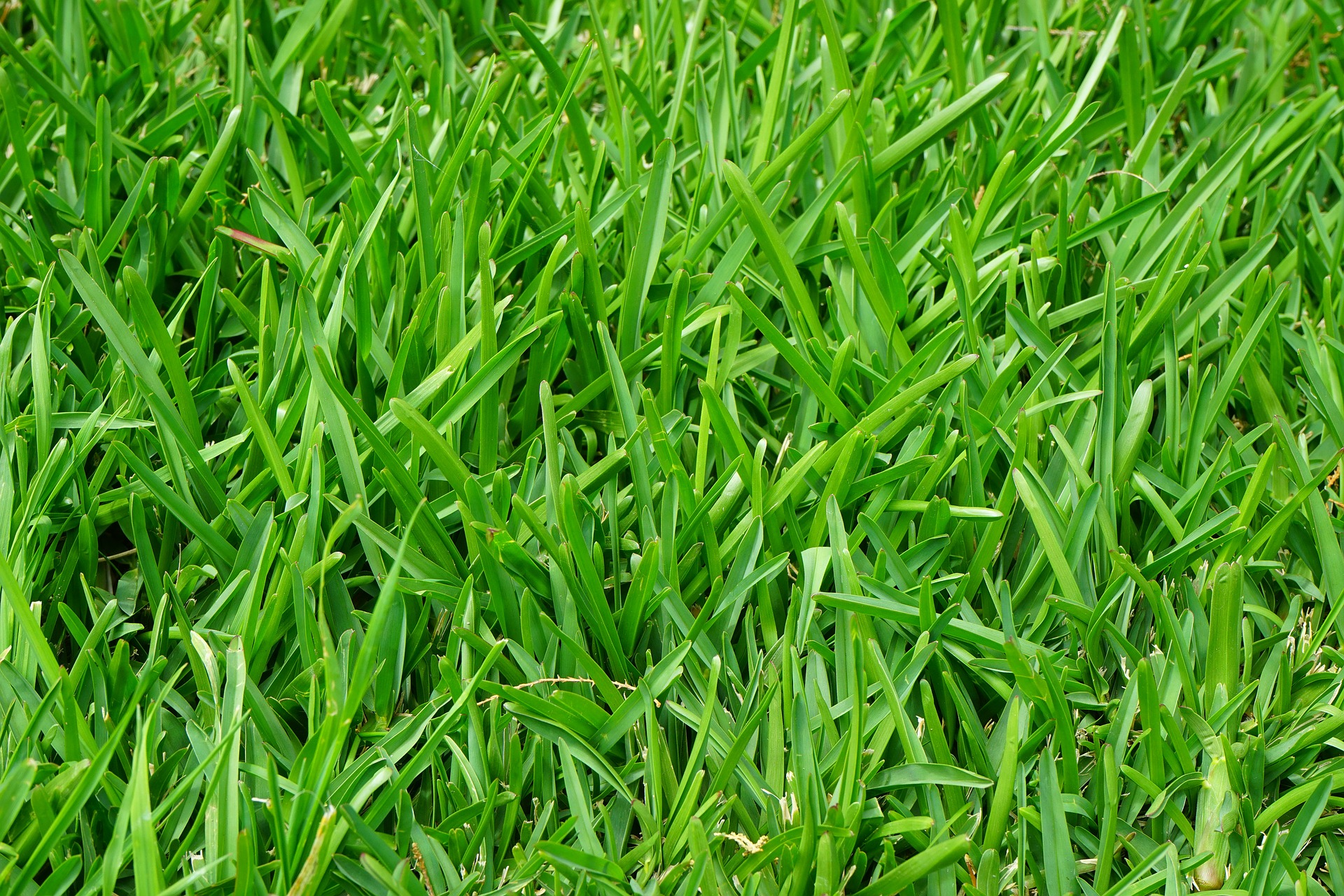 Lawn Care Essex Hertfordshire